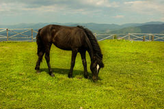 Horse on top of a mountain royalty free stock image
