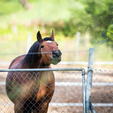Horse touching a electric fences Royalty Free Stock Photography