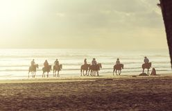 Horse tour Stock Images