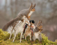 Horse tour. Red squirrels standing with horses Royalty Free Stock Photography