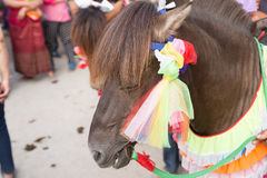 Horse in traditional buddhist monk ordination ceremony Stock Images
