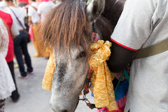 Horse in traditional buddhist monk ordination ceremony Royalty Free Stock Photos