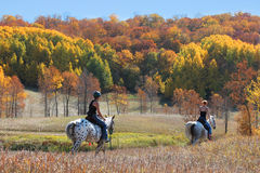 Horse Trail in Fall Colors Royalty Free Stock Photos