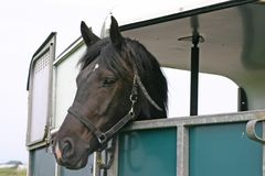 Horse in trailer Stock Image