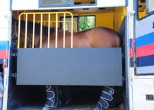 Horse Trailer. Transporting a horse in the horse's trailer Stock Images