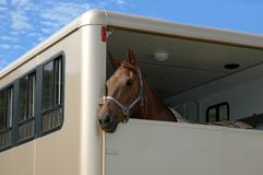 Horse in the trailer Royalty Free Stock Images