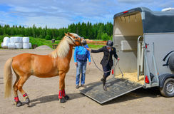 Horse trailer. Rider woman trying to pull horse to trailer Royalty Free Stock Photos