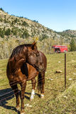 Horse and Trailer Stock Photo