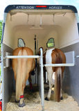 Horse trailer and two horses Royalty Free Stock Photography