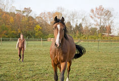 Horse and Trainer Stock Photography