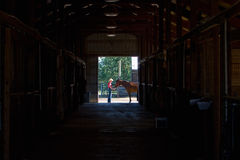 Horse and Trainer - horizontal Stock Image