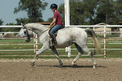 Horse training. Woman riding flea bitten grey horse ,warm-up exercises for dressage training Royalty Free Stock Photos