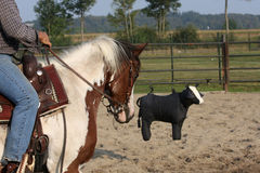 Horse training Royalty Free Stock Images