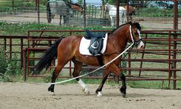 Horse training royalty free stock photography