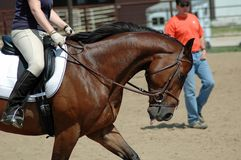 Horse training. Woman riding thoroughbred horse while trainer gives instructions Stock Photography