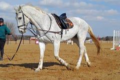 Horse training Stock Image