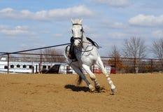 Horse training stock photography