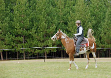 Horse Training. A rider works with her Paint horse in rural New Brunswick Stock Photo