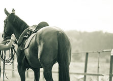 Horse training. Concept: horse on a training manege in monochromatic tones Stock Photo