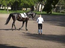 Horse training Stock Photos