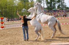 Horse training show Royalty Free Stock Photos
