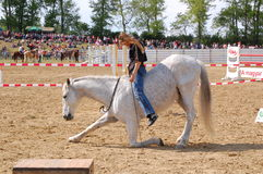 Horse training show Stock Images