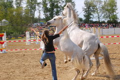 Horse training show Royalty Free Stock Image