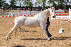 Horse training show Royalty Free Stock Images