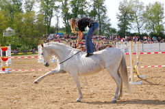 Horse training show Royalty Free Stock Photography