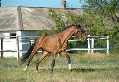 Horse training Royalty Free Stock Image