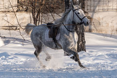 Horse training workout winter Royalty Free Stock Photography