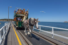 Horse tram ride to Granite Island, South Australia Royalty Free Stock Images