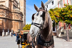 Horse Transport for Tourists in Sevilla, Spain Stock Photography