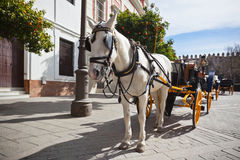 Horse Transport for Tourists in Sevilla, Spain Stock Image
