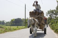Horse transport is very popular type of transport in our country. It is used in occasion. So, it is our culture. It is used as an Stock Image