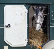 Horse during transportation Stock Photos