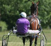 Horse and Trap Race. Trap racing in Wales Stock Photos