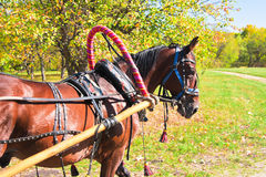 Horse with trappings Stock Image