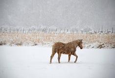 Horse Treads Winter Pasture Royalty Free Stock Photos