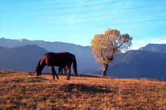 Horse and tree. A horse in autumn sunset