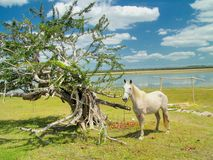 Horse and Tree Stock Image