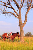 Horse and tree stock photography