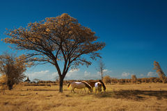 Horse and tree. In the dessert Royalty Free Stock Photo