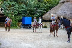 Horse, Tree, Horse Like Mammal, Pack Animal royalty free stock photo