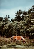 Horse, Tree, Horse Like Mammal, Pasture Stock Images