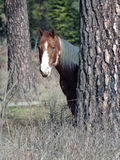 Horse by a tree. Stock Photography