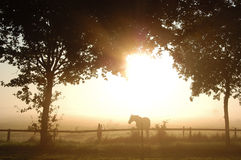 Horse and trees in morning fog Royalty Free Stock Photography
