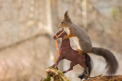On a horse trip. Profile and close up of  red squirrel standing on a horse Stock Image