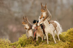 Horse trip. Profile and close up of  red squirrels standing on and beside horses Stock Images
