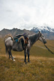 Horse with a trophy of ibex after hunting in the Tien Shan mount Royalty Free Stock Photos